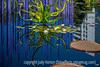 10/25/14 - Chihuly at the Denver Botanic Gardens; I love the chartreuse greens against the shades of blue with the white water lily flowers and their pads before the sculpture.  Hope you like this one!<br /> <br /> Thanks for your comments on my shot of the drawbridge!  Remember Indigo's Pink Challenge for Breast Cancer Awareness on Sunday!  Think PINK!
