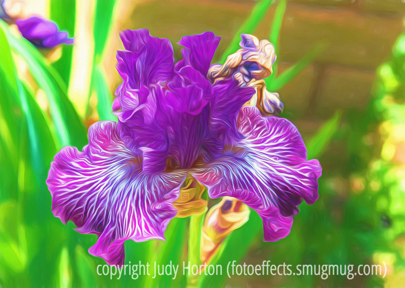 Iris - I've been reprocessing some of my older images...this is one of them.