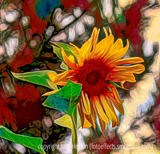 Sunflower - a different version of the sunflower I posted a few days ago