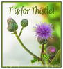 T is for Thistle!