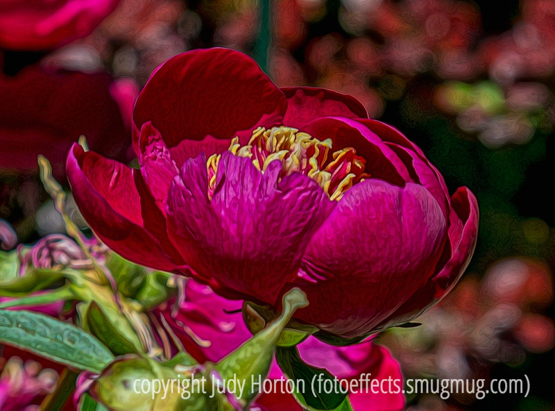 """Peony - Just a reminder that the """"U"""" alphabet challenge is coming up on Sunday."""
