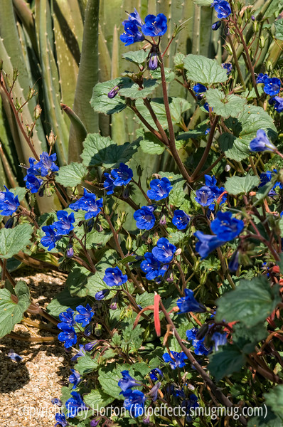 Flower at the Desert Botanic Garden