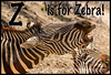 Z is for Zebra! - My 4 additional entries directly follow this one. Congratulations to everyone participating in the alphabet challenge on making it to final week!