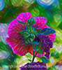 Hollyhock  with a painterly treatment