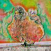 Unusually Fluffy Robin