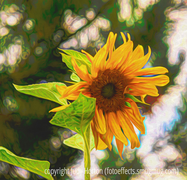 Sunflower - painterly version; we had several lovely sunflowers yesterday and I have some growing in my garden, as well.