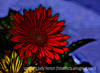 Gerbera - I think this effect looks like a batik.