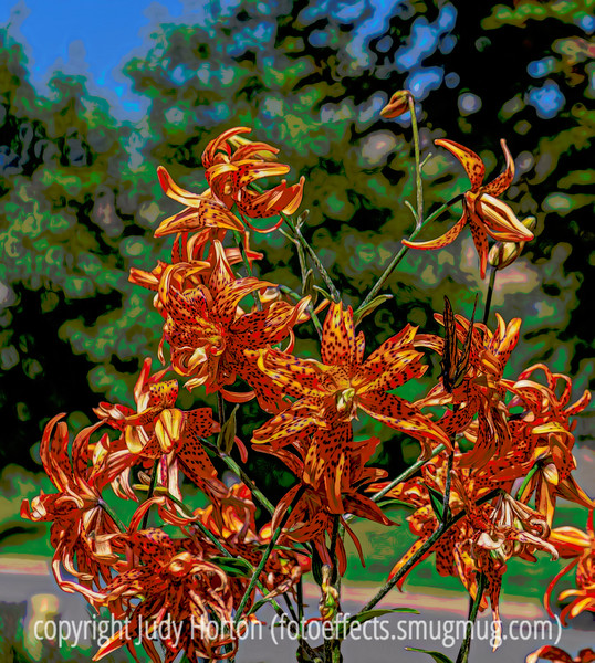 Tiger Lilies and a Giant Swallowtail