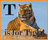 T is for Tiger!