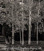 Aspen - an old image I reprocessed
