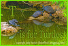 T is for Turtles!