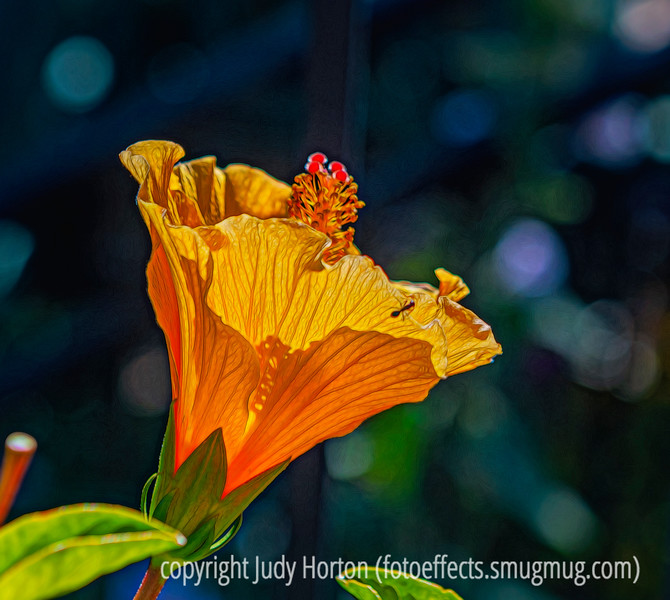 Chinese Hibiscus with Ant