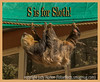 S is for Sloth, Suspended and Scruffy (thanks, Elizabeth)!
