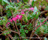 Icy Bleeding Heart - and snow is predicted once again for Monday