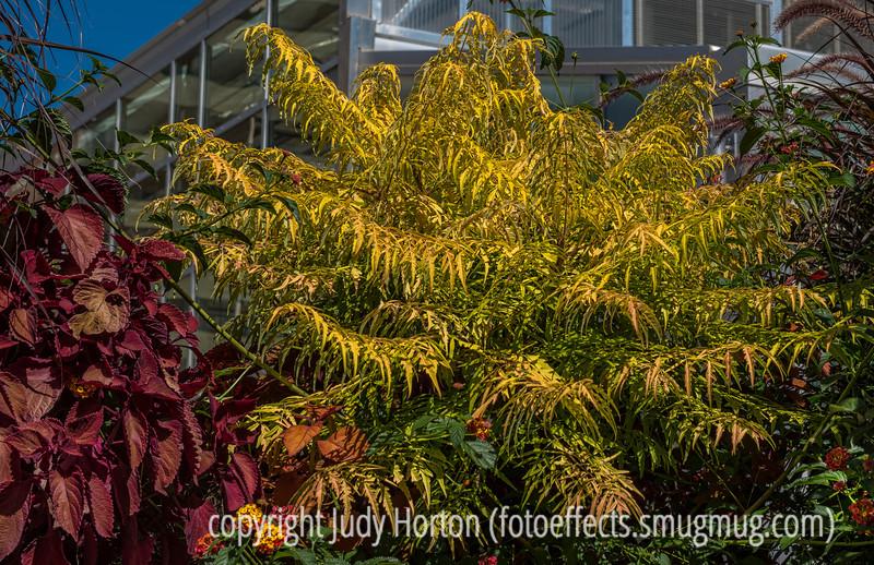 Autumn Color - Golden Sumac