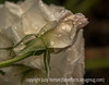 Raindrops on Rosebud