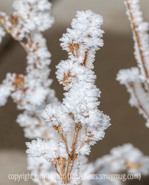 Snow, Hoarfrost and Ice Crystals on a Seedhead