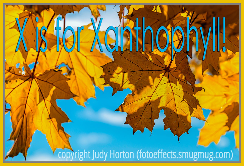 X is for Xanthophyll!