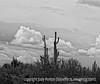 Arizona Desert near Phoenix