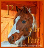 P is for Pony!