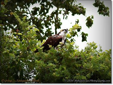 2014-06-12_IMG_1657_Sawgrass Park,St Pete,Fl _