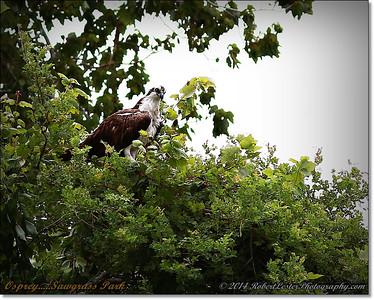 2014-06-12_IMG_1658_Sawgrass Park,St Pete,Fl _