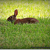 2014-07-26_IMG_0949__Rabbit