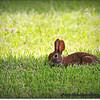2014-07-26_IMG_0950__Rabbit
