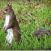 2014-07-26_IMG_0937__Squirrel