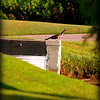 Anhinga....Clearwater,Fl      © 2014 RobertLesterPhotography.com
