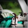 2014-06-06_IMG_0830__Anole Lizard,Clearwater,Fl