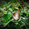 2014-10-15_IMG_6635_ Pinellas Park,Fl
