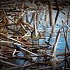 2014-10-15_IMG_6543_ Pinellas Park,Fl