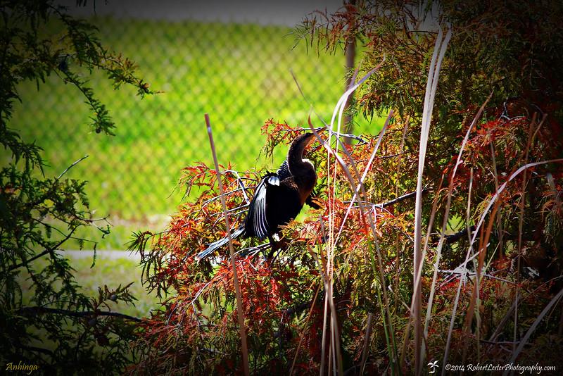 2014-10-15_IMG_6577_ Pinellas Park,Fl