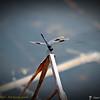 2014-10-15_IMG_6558_ Pinellas Park,Fl