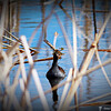 2014-10-15_IMG_6500_ Pinellas Park,Fl