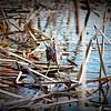 2014-10-15_IMG_6542_ Pinellas Park,Fl