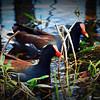2014-10-15_IMG_6519_ Pinellas Park,Fl