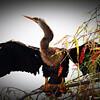 2014-10-15_IMG_6475_ Pinellas Park,Fl
