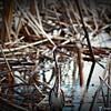 2014-10-15_IMG_6547_ Pinellas Park,Fl