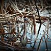 2014-10-15_IMG_6546_ Pinellas Park,Fl