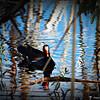 2014-10-15_IMG_6494_ Pinellas Park,Fl