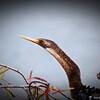 2014-10-15_IMG_6468_ Pinellas Park,Fl