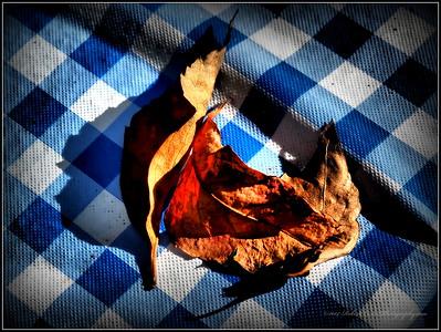 Winter leaf...Clearwater,Fl.