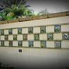 2015-11-12_DSC02857_Botanical Gardens,Largo,Fl