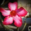 2015-11-12_DSC02831_Botanical Gardens,Largo,Fl insert