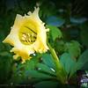 2015-11-12_DSC02828_Botanical Gardens,Largo,Fl  insert