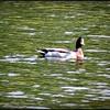 2015-01-09_P1092857_Lake Chautauqua Park,Clearwater,Fl