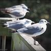 2016-02-23_P2230667_Eagle Lake County Park,Largo,Fl