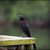 2016-02-23_P2230694_Eagle Lake County Park,Largo,Fl